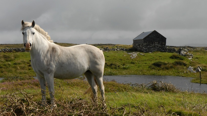 horse-873798_1920